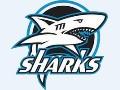 .oO Sharks Fighters Oo.